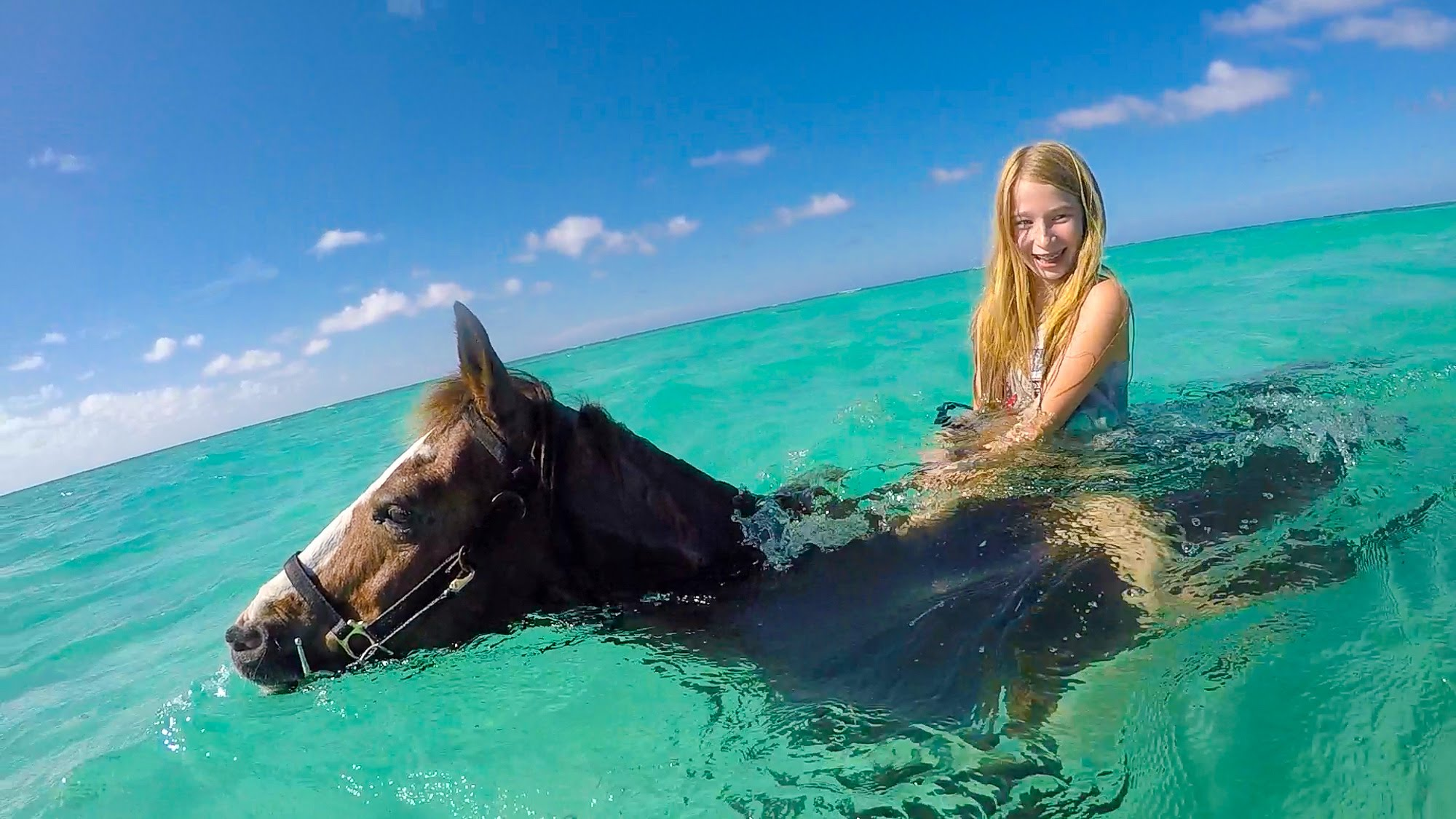 Swimming-Horses-of-Grand-Cayman