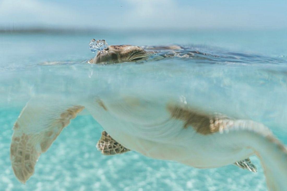 Dan Legend Photography Seven Mile Beach Turtles