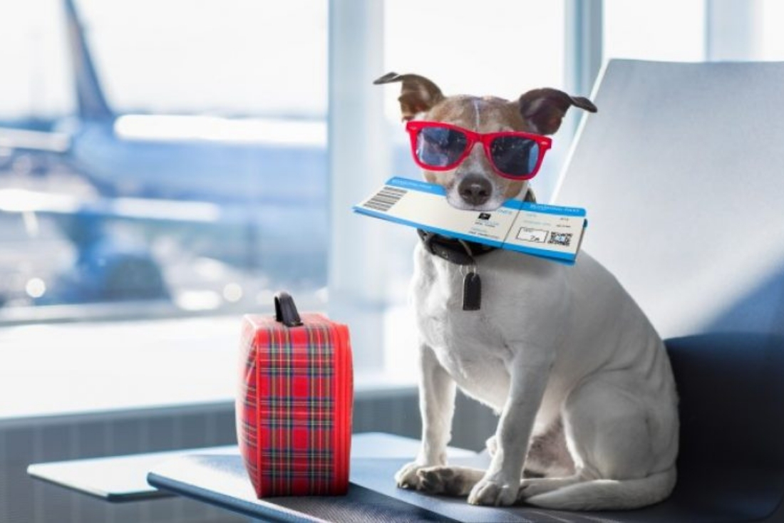 Traveling with pets? What to do!