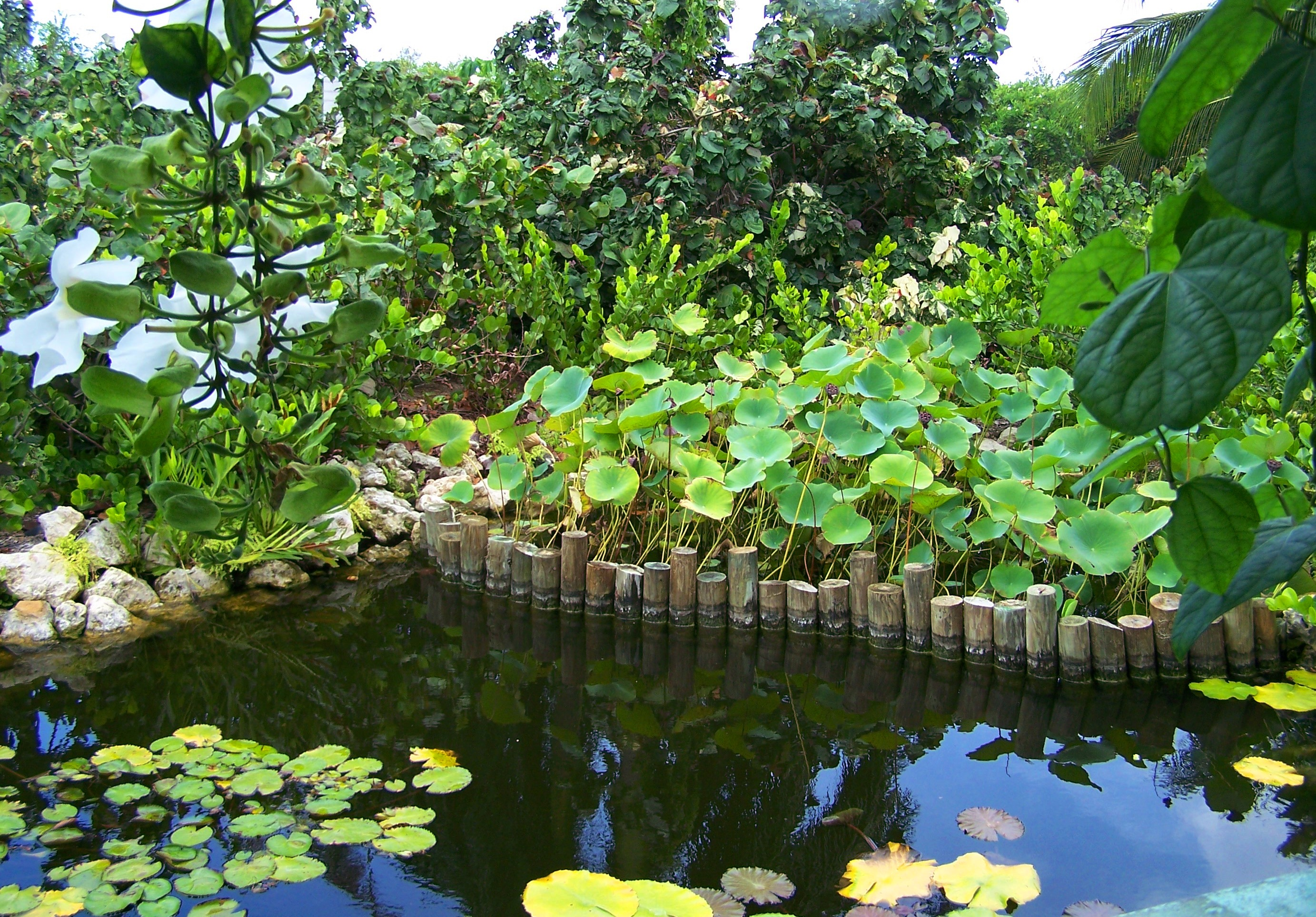 Cayman Islands Botanic Park