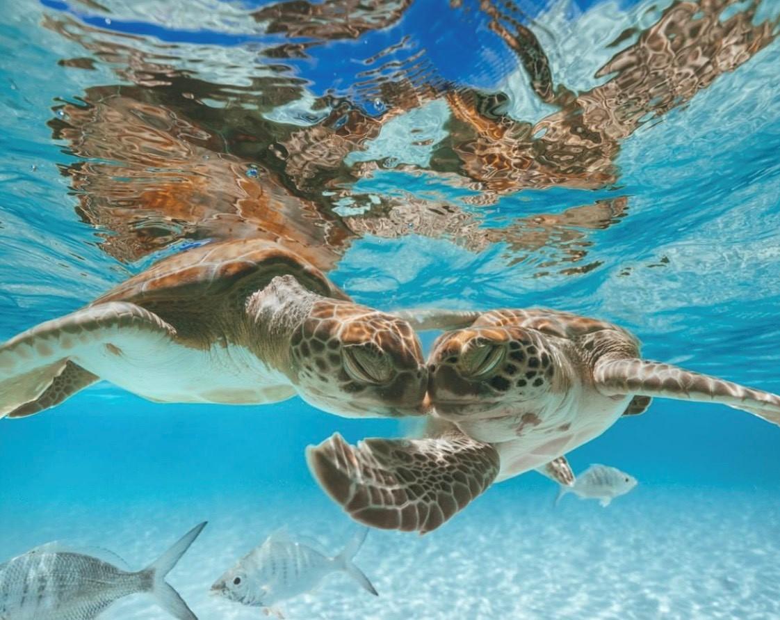 The Cayman Islands: World Class Diving, First Class Service