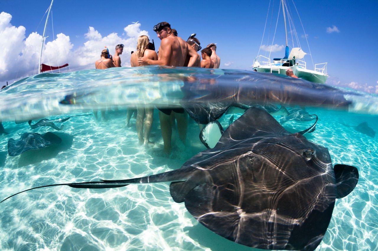 Stingrays in Cayman